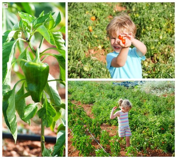Agroturismo Sant Blai 9